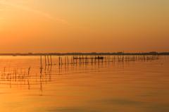 ☆琵琶湖の朝は、心地よい風が吹いていました