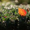 ☆落ち葉のコンチェルト
