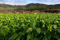 ♪♪京都~~大原、、三千院。。。♪♪