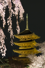 東寺の夜桜