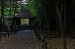 秋の古刹めぐり--法然院