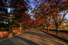 ☆秋の赤い散歩道
