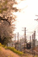 桜とパレオエクスプレス