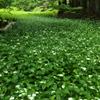 深緑の森へ
