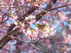 春 待ちどおしく