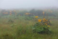 雲上に咲く花