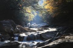 光降る秋の渓谷