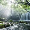 光降る鍋ヶ滝