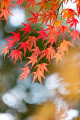 晩秋を惜しむ声