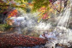 金鱗湖の朝の光