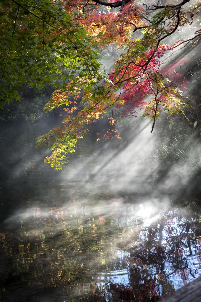 金鱗湖の秋