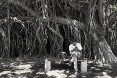 ガジュマルの樹の下で