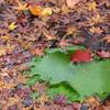 葉に浮かぶ小さな秋