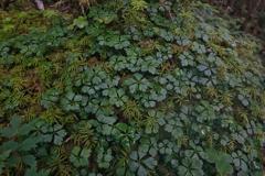 森の中の緑