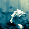 I say love it is a flower