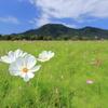山のふもとの花畑