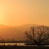 朝日の中の木立