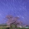 星降る夜の夫婦桜
