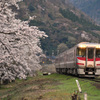 大岩駅の桜と特急はまかぜ