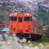 泊小学校の桜とタラコ列車
