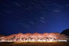 豊房の桜と冬の大三角