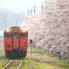 大岩駅の桜とタラコ列車