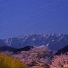 月夜の大山と桜