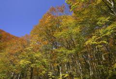 紅葉の裏大山