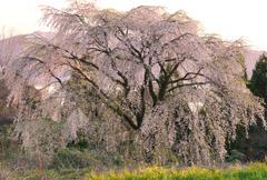 春の東郷湖畔
