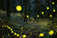 林道に舞う妖精