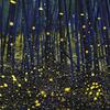 竹林に舞うヒメボタル