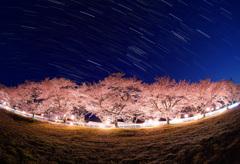 豊房の桜と沈む冬の大三角