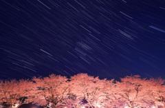 豊房の桜と沈むオリオン座