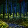 林道のヒメボタル