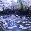 落花の流れ