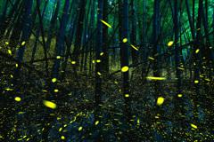 黄金の竹林