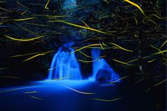 不動滝に舞うゲンジボタル