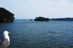 旅写真 松島湾 ウミネコ 3