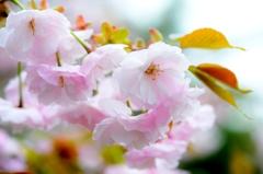 蕾も綺麗に咲いたね(^-^)