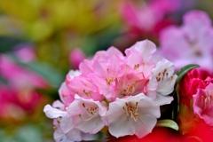 石楠花3パシャリ _・)