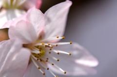 桜マクロ(^^)
