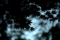 秋色に染まる...