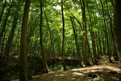 森の中で…