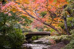 水辺の秋景色