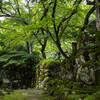 雨上がりの高源寺
