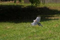 美しき飛翔