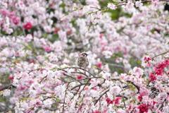 咲き乱れる花の真ん中で・・・