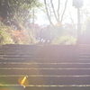 光へ導く階段