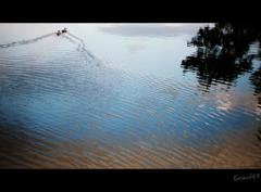 川面のランデヴー