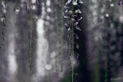 たおやかに垂れる花姿